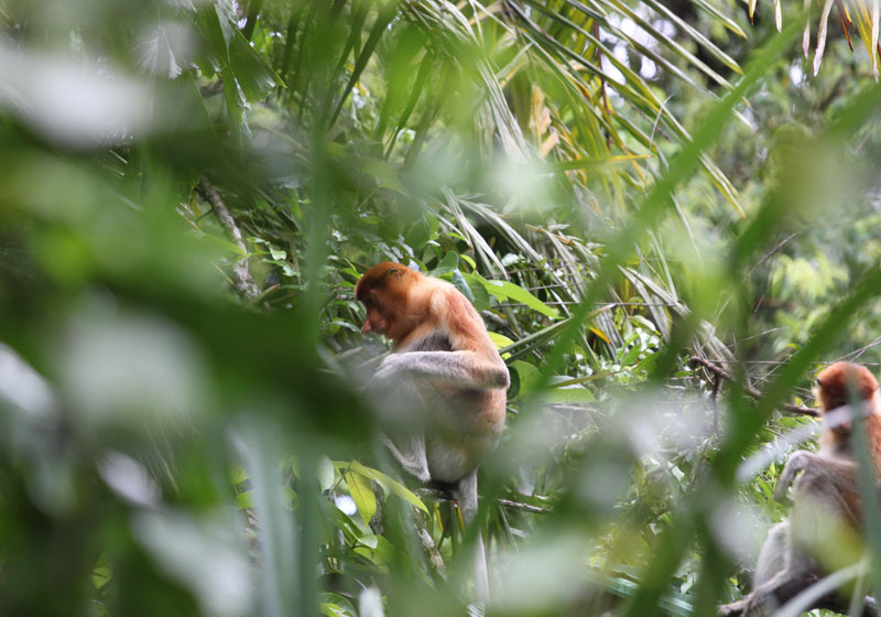 Bako National Park Kuching