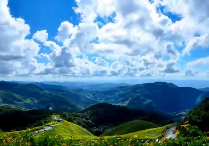 Bua Tong Fields Doi Mae U-Kho