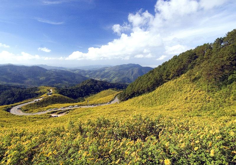 Bua Tong Fields Doi Mae U-Kho