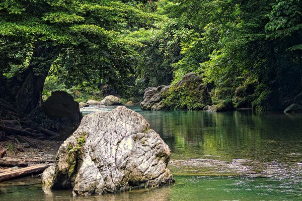 Gunung Leuser National Park