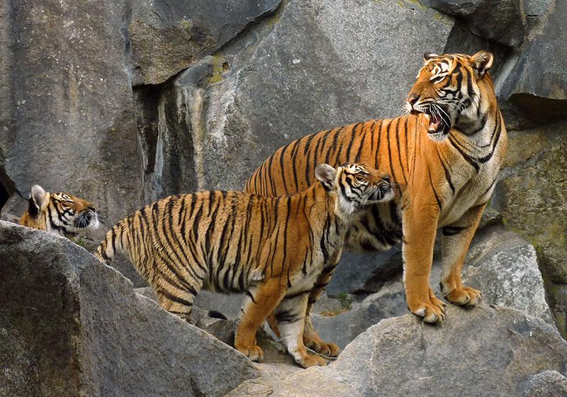 Hukawng Valley Tiger Reserve