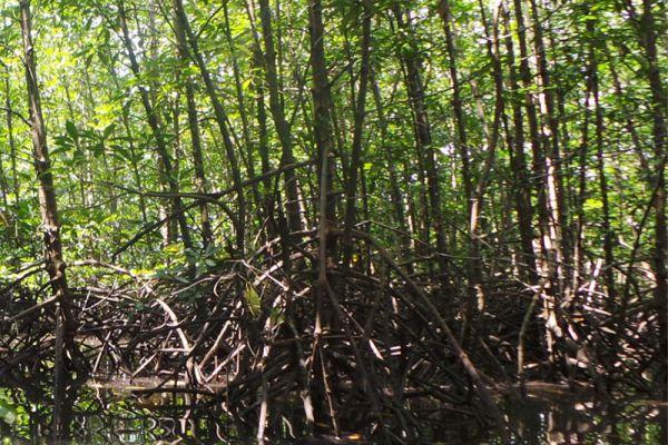 Mein-ma-hla Kyun Wildlife Sanctuary