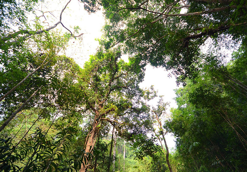 Namtok Phliu National Park