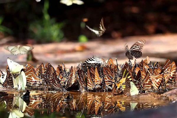 Pang Sida National Park