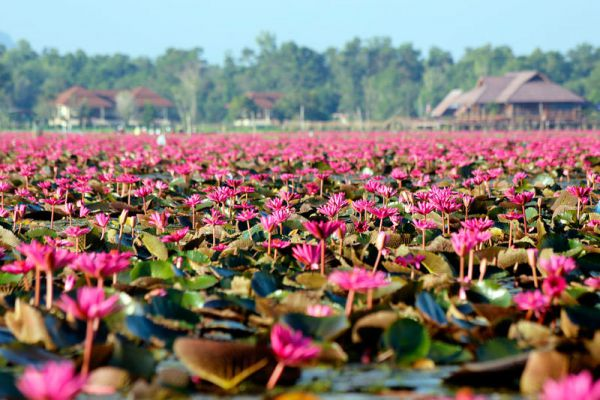 Thale Noi Waterfowl Reserve