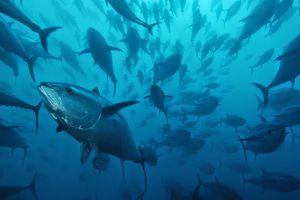 All 4 Diving Phuket
