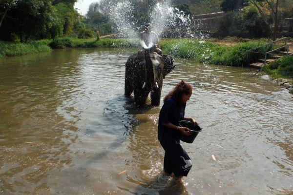 Baanchang Elephant Park