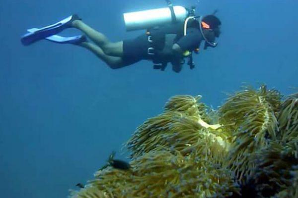 Buddha View Diving
