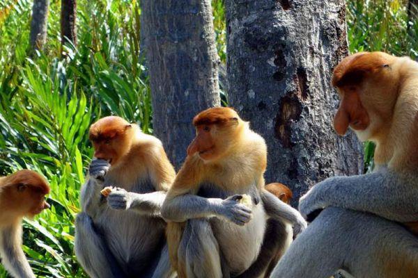 Exotic Borneo