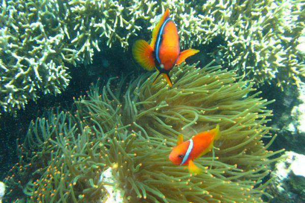 Mark Scotts Diving