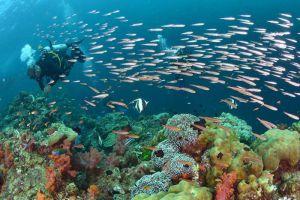 Palm Beach Divers