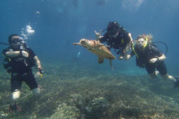 Phuket Aussie Divers