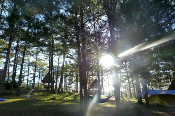 Pine Track Adventures