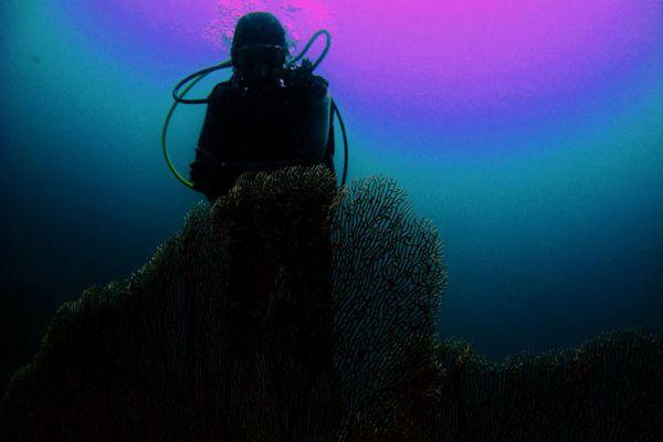 World Dive Center