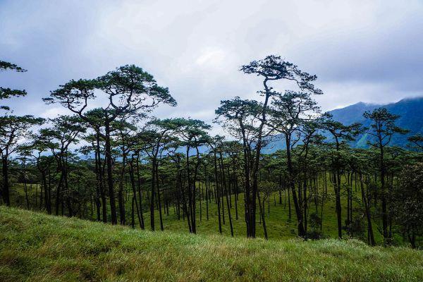 Phu Soi Dao National Park