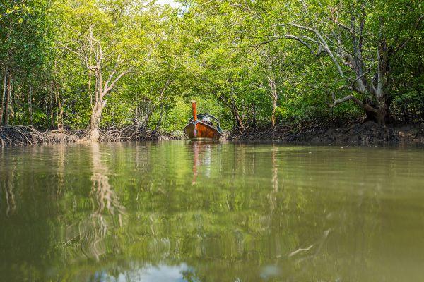 Baan Thung Yee Pheng Mangrove Forest