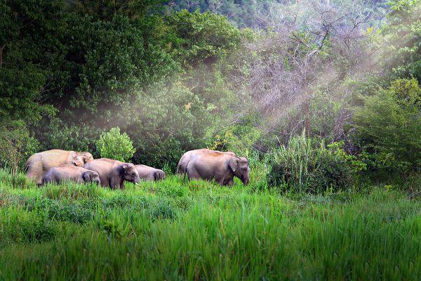 Klong Nakha Wildlife Sanctuary