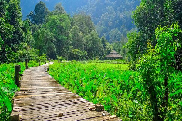 Thale Ban National Park