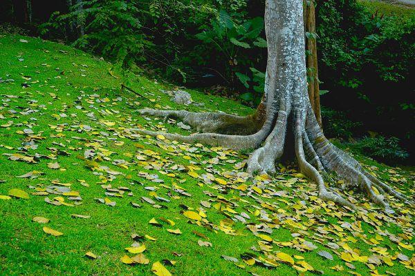 Khlong Wang Chao National Park