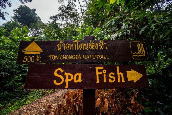 Namtok Ton Chong Fa