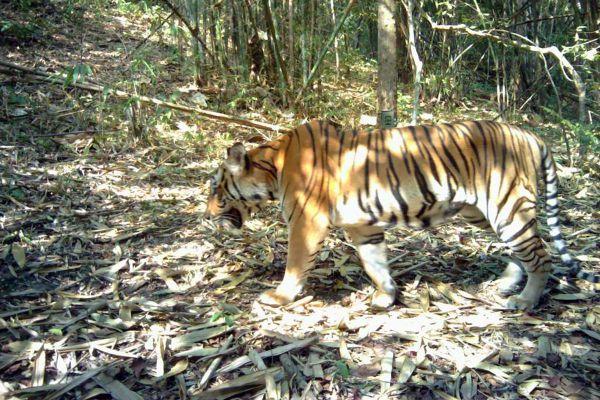 Salakpra Wildlife Sanctuary