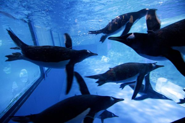 Sea Life Ocean World