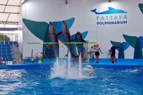Dolphinarium Pattaya