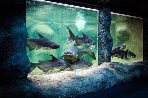 Monsters Aquarium Pattaya