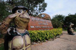 Sea Turtle Conservation Center Royal Thai Navy