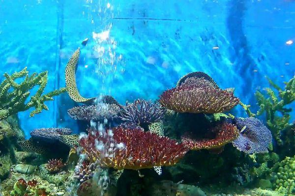 Kung Krabaen Bay Aquarium