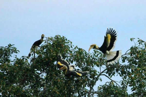 Kaeng Krung National Park