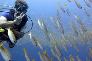 Adang-Sea-Divers-Koh-Lipe-Satun-Thailand-005.jpg