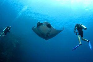 All-4-Diving-Phuket-Thailand-02.jpg