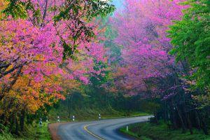 Ang-Khang-Royal-Project-Chiang-Mai-Thailand-002.jpg