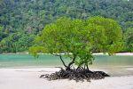 Ao-Mai-Ngam-Phang-Nga-Thailand-01.jpg