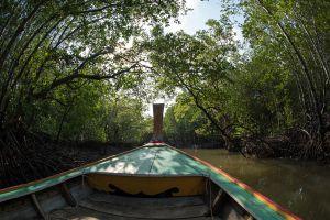 Baan-Thung-Yee-Pheng-Mangrove-Forest-Lanta-Krabi-Thailand-02.jpg