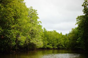 Baan-Thung-Yee-Pheng-Mangrove-Forest-Lanta-Krabi-Thailand-05.jpg
