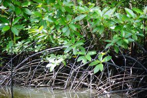 Baan-Thung-Yee-Pheng-Mangrove-Forest-Lanta-Krabi-Thailand-06.jpg