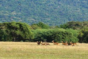 Baluran-National-Park-East-Java-Indonesia-002.jpg