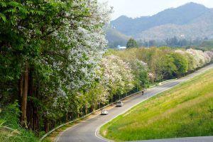 Ban-Bang-Phra-Chonburi-Thailand-01.jpg