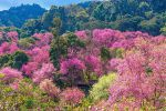 Ban-Khun-Chang-Khian-Chiang-Mai-Thailand-02.jpg