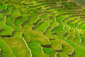 Batad-Rice-Terraces-Ifugao-Philippines-004.jpg