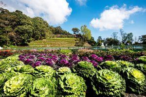 Bhubing-Rajanives-Palace-Chiang-Mai-Thailand-07.jpg