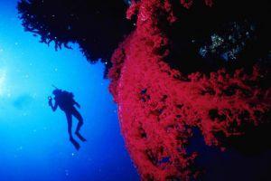 Blue-Coral-Diving-Hoi-An-Vietnam-001.jpg