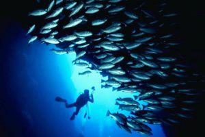 Blue-Coral-Diving-Hoi-An-Vietnam-002.jpg