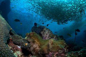 Blue-Planet-Divers-Lanta-Krabi-Thailand-001.jpg