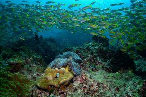 Blue-Planet-Divers-Lanta-Krabi-Thailand-003.jpg