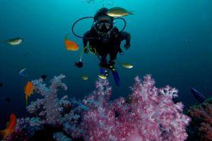 Blue-Planet-Divers-Lanta-Krabi-Thailand-005.jpg