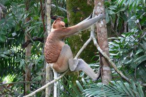 Borneo-Adventure-Kuching-Sarawak-Wildlife-Tour.jpg