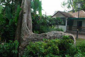 Botanic-Gardens-Penang-Malaysia-001.jpg